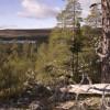 Töfsingdalens nationalpark