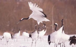Kushiro wetlands national park