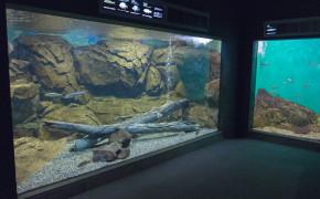 Biwasjöns museum