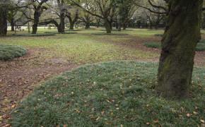 Koganei parken