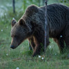 19 Wild Bear Center in Finland 2015