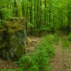 Lur naturreservat