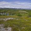 133 Stabbursdalens nationalpark