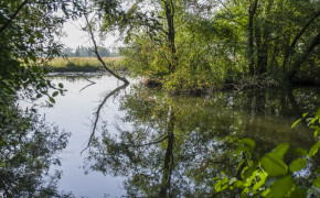 De Biesbosch nationalpark