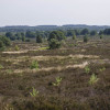 Sallandse Heuvelrug nationalpark