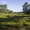 Dwingelder weld nationalpark