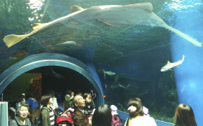Shinagawa Epson Aquarium